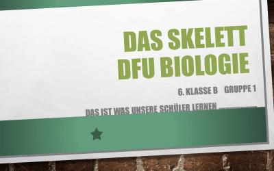 Das skelett dfu biologie